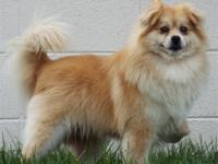 Primary Color: Brown Weight: 19.3 Age: 4yrs 1mths 0wks
