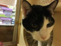 Luke resides at the Petsmart cat room in Yonkers.  Hes