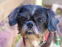 LuLa's story This little sweetheart is Lula a 9 year