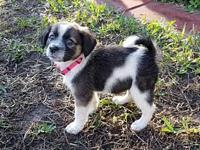Lulabelle's story This gorgeous little girl puppy is