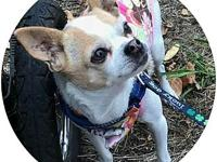 Lulu's story Lulu is a sweet senior girl looking for a