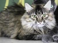 Lulu's story Lulu came in labeled as a feral cat. We