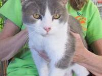 LULU's story SENIOR - Lulu is a gray and white female