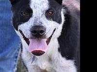 Luna's story Meet Luna she is a cute border collie mix