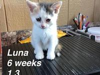 Luna's story Our pets are spayed/neutered and current