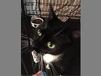 Luna's story Description: Beautiful tuxedo with the