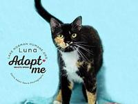 Luna's story Luna is a gorgeous spayed female. She has