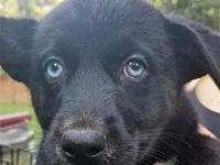 Luna's story Welcome Luna ! These sweet pups are just