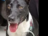My story Meet Luna JEI am part Border Collie and maybe