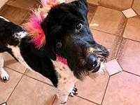 Luna's story Luna is a beautiful girl. Shes new to our