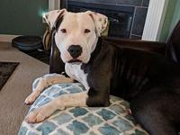 Luna (pup)'s story Luna is a 2 year old, fun loving and