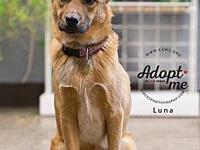 Luna's story If you are interested in adopting a CAWS