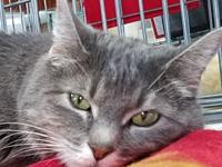 13 years old Luna arrived at Suncoast Animal League on