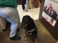 Luna is a sweet dog. She needs a Home where she is the