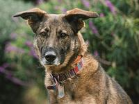 Luna's story Are you looking for a running companion?