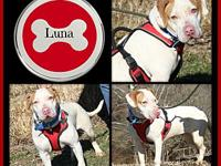 My story Luna is an adorable 1-1/2 year old female