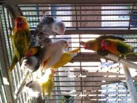 Many type of Love Birds for sale! All with different,