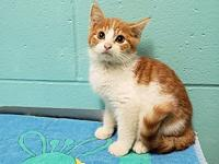 Lux's story Lux is a super sweet 3 month old male
