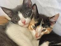 Luz and Moonlight - Bonded Siblings's story Luz