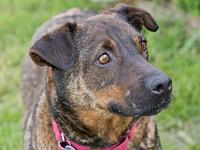 Lyla's story Lyla is a shy and quiet girl we think will