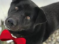 Lyle's story Lyle is a sweetheart waiting for