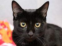 Lyle's story I am a friendly, playful kitten! I love to