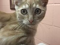 Lynyrd's story Lynyyrd is a very handsome and sweet,