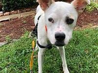 Mabel's story Welcome sweet Mabel to Gram Rescue Ranch!