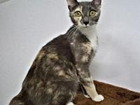 Mabel's story Mabel is a female dilute calico cat, born
