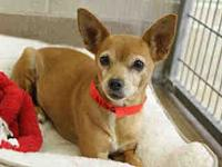 Mabel's story Mabel is about 10 yrs old, very healthy,