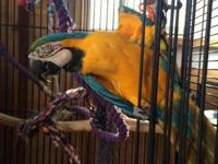 I have an adult female macaw that needs a new home.