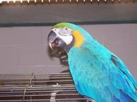 Macaw - Patches - Large - Senior - Female - Bird