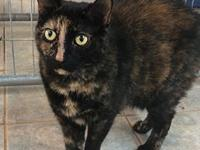 Macey's story Affectionate Friendly Independent Sweet