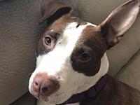 Macy's story  Available!  Miss Macy is 2-3 years old