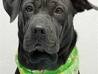 MacY's story Hello! My name is Macy a sweet 1 year old