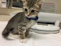 Maddex's story Maddex is a fun little kitten ready for