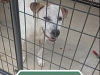 Maddie's story Maddie is a red heeler and lab mix about