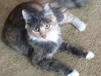 Maddie's story Maddie is an affectionate young cat who