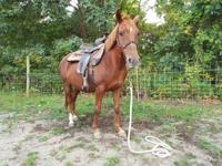 Maddie is a 10 year old 13.2hh pony. She is progressing