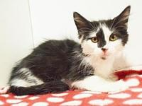 *MADDY's story Outgoing and loving kitten. We recommend