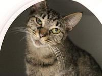 Madge's story Madge is a petite 1-year-old brown tabby