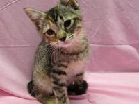 Madison's story 18-c05-014 Madison Breed: DSH Mix Size:
