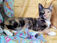 Mae 29104's story Mae is a 2-year old, spayed female,