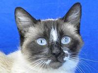 Mae's story I'm Mae, an elegant Siamese girl who has