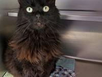 Mae Mae's story Mae Mae is a beautiful 4 year old,