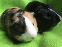 Meet  Maestro and Allegro who are 2 very young guys who