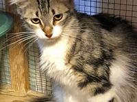 Maeve's story Poor little Maeve was dumped close to a