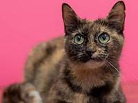Magdalene's story Magdalene Domestic Short Hair Mix