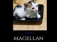 Magellan - Sweet Kitty!'s story You can fill out an
