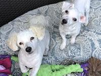 Maggie's story Precious girl is bonded with a male